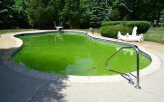 Бассейн для дачи каркасный стал зеленеть по стенкам что делать